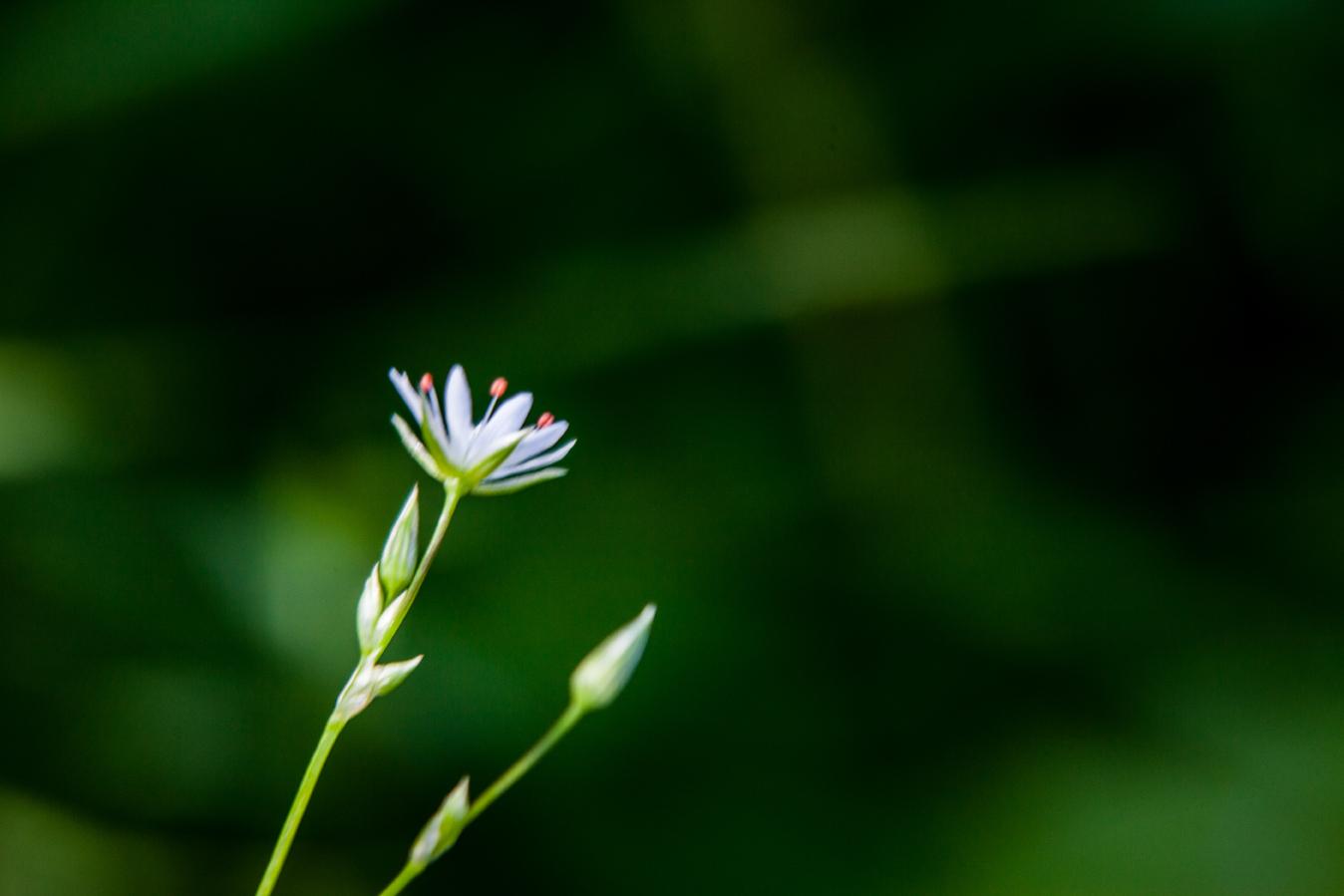 Foto: Sunpictures.de