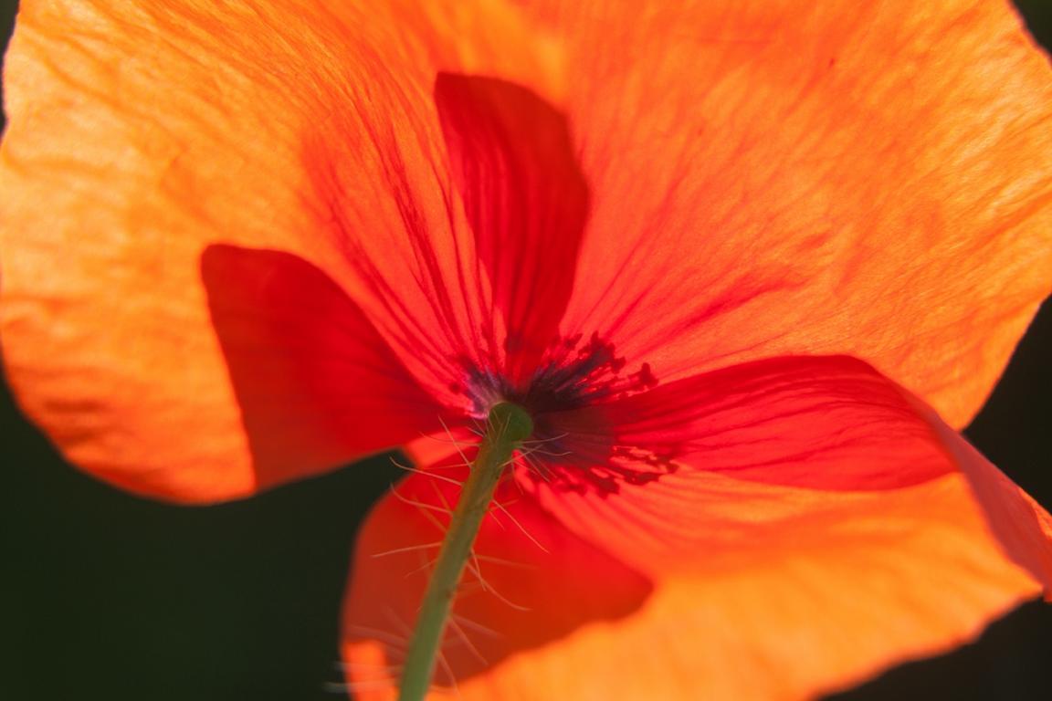 Foto: Sunpictures.de Verzeihen