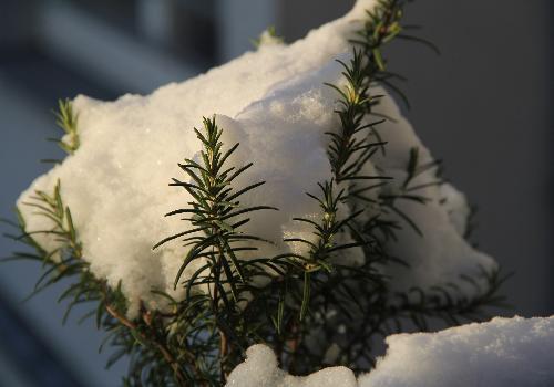 Foto: Anne Kathrin Frihs Weihnachten