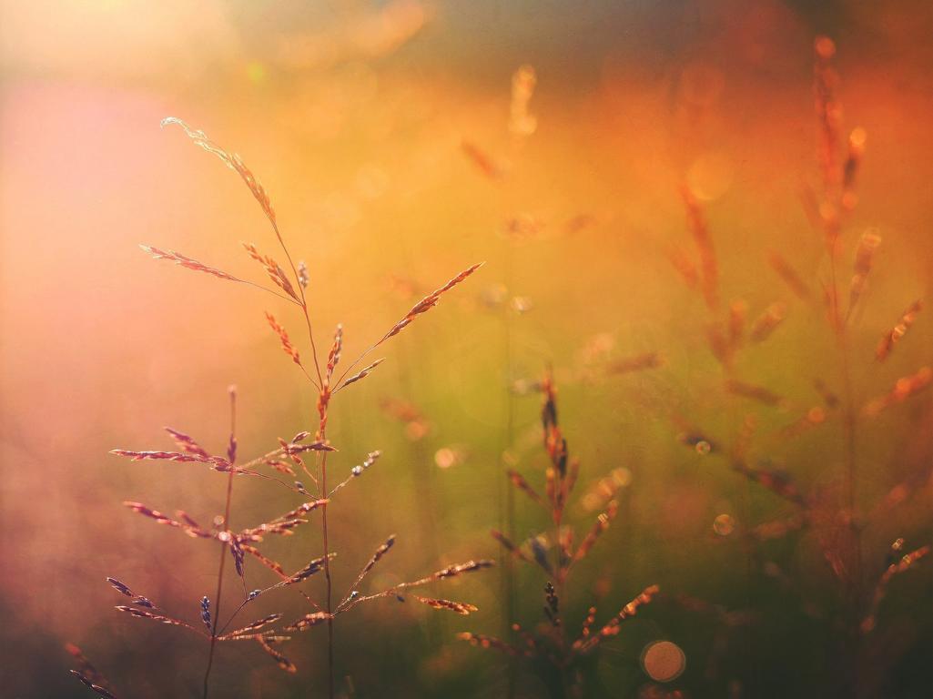 Mini Atem Meditation Zum Entspannen, Auftanken Und Wohlfühlen Bildquelle: Pixabay